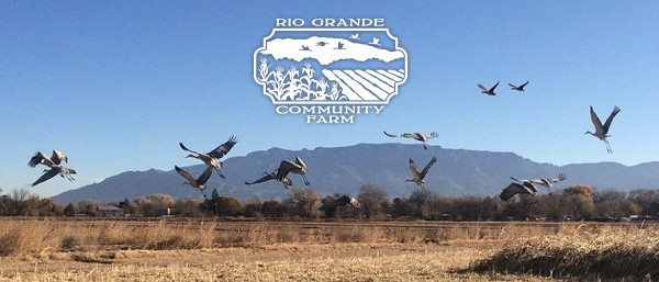Cranes flying at the farm