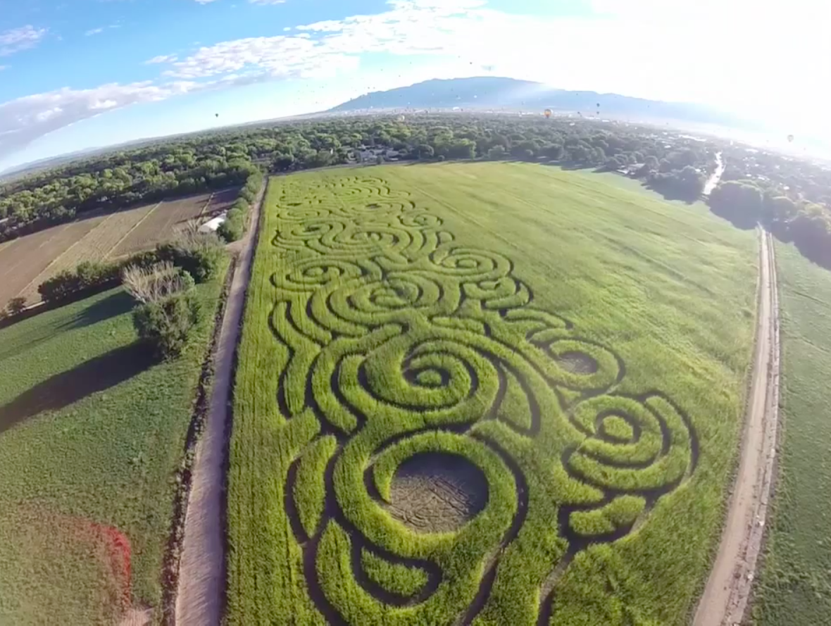 Celebrating Color at the 19th Annual Maize Maze