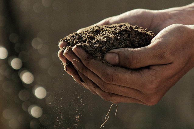 Person holding soil in sunlight
