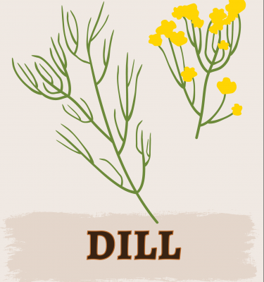 Dill illustration