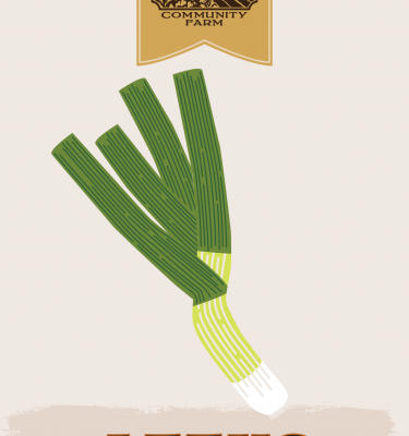 Leeks illustration