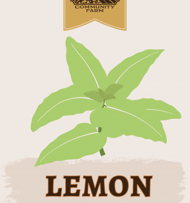 Lemon Balm Illustration