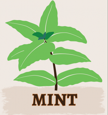 Mint illustration