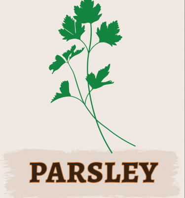 Parsley Illustration