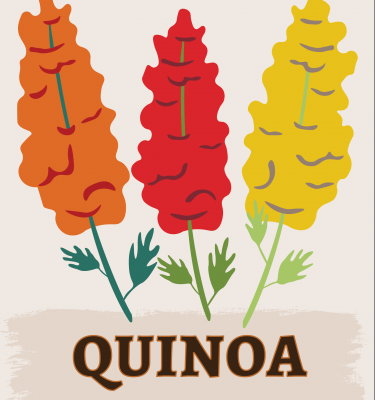 Quinoa illustration