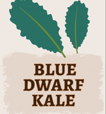 Blue Dwarf Kale Illustration