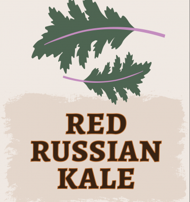 Red Russian Kale Illustration