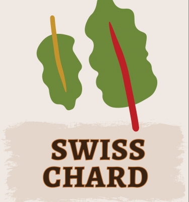 Swiss Chard Illustration