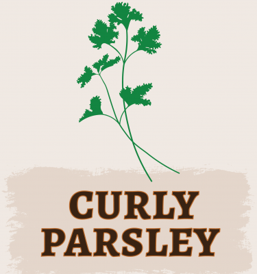Curly Parsley Illustration