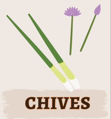 Chives Illustration