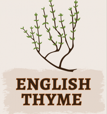 English Thyme Illustration