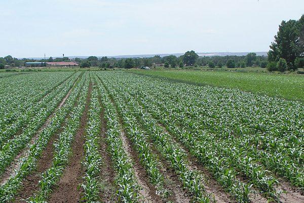 field-rows
