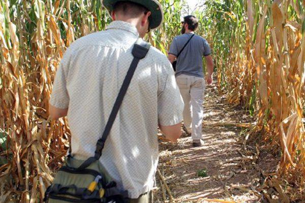 maize-people