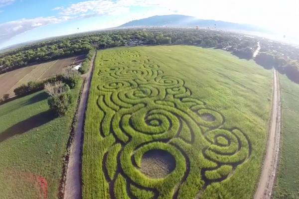 2016 Maize Maze Field
