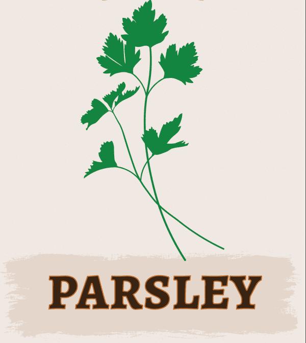 Parsley Illustration