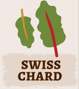 Swiss Chard Illustration