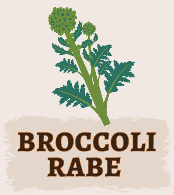 Broccoli Rabe Illustration