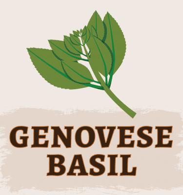 Genovese Basil